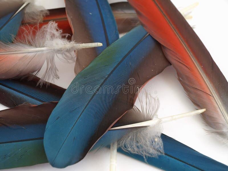 Plumas flojas del Macaw imagenes de archivo