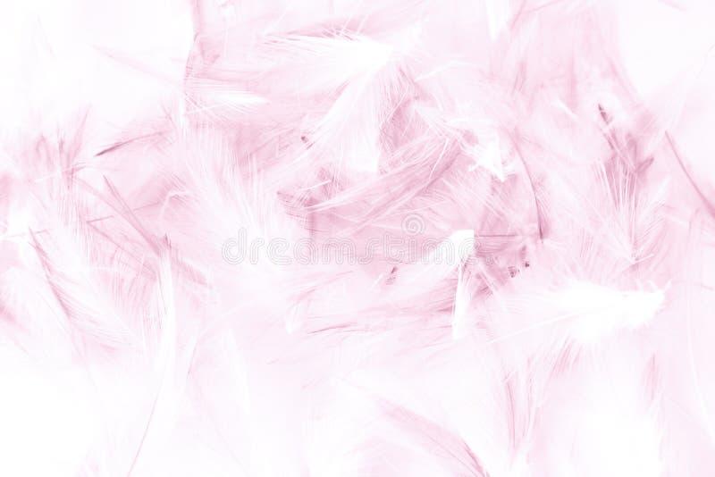 Plumas grises de la textura del color hermoso del extracto y azules blancas aisladas en el modelo y el papel pintado blancos del  fotografía de archivo