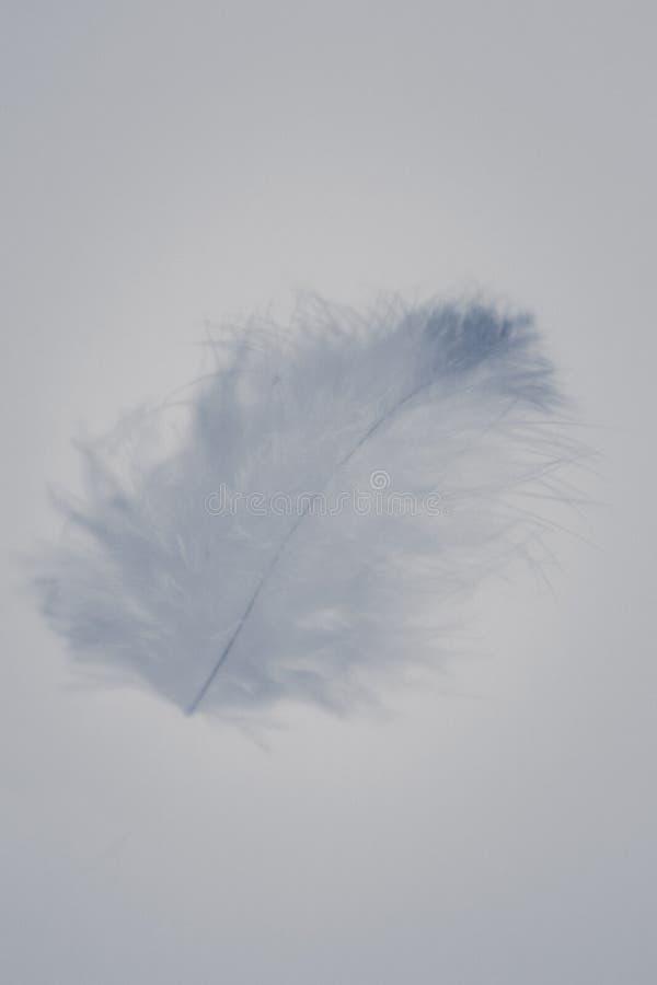 Plumas grises de la textura del color hermoso del extracto y azules blancas aisladas en el modelo y el papel pintado blancos del  imagenes de archivo