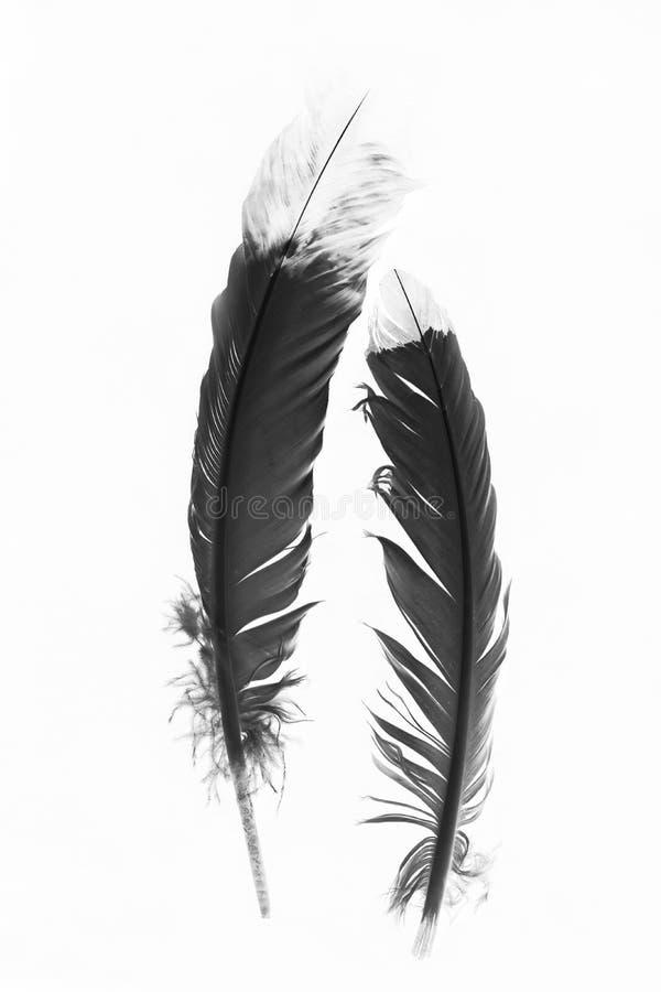 Plumas indias blancos y negros en un fondo blanco imagenes de archivo