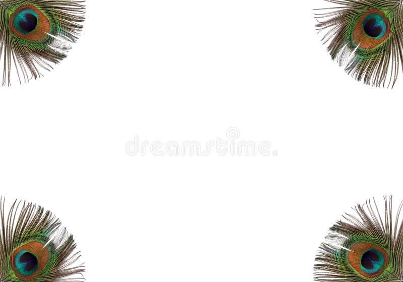 Plumas iridiscentes del pavo real fotografía de archivo
