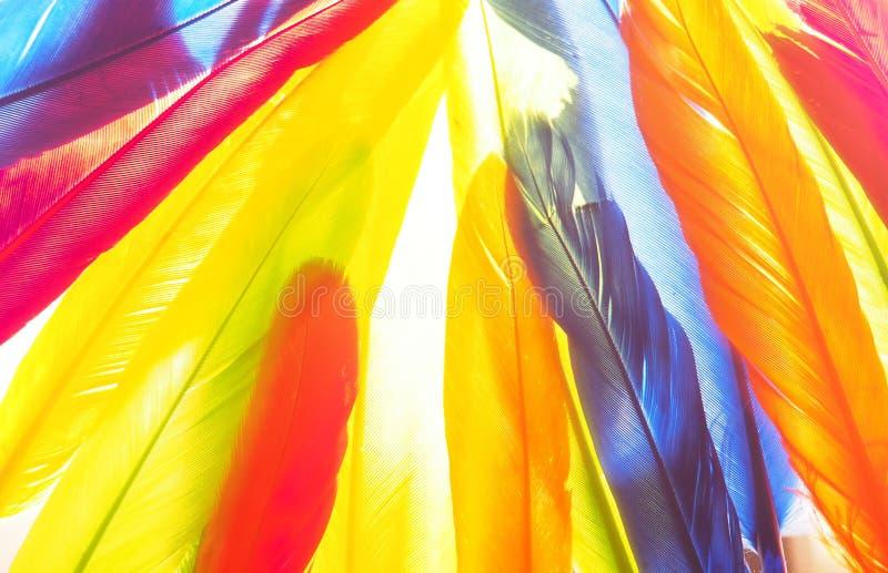 Plumas rojas, verdes, amarillas, azules Foto del fondo imagen de archivo libre de regalías