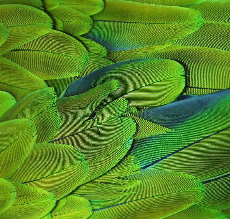 Plumas verdes del Macaw fotografía de archivo