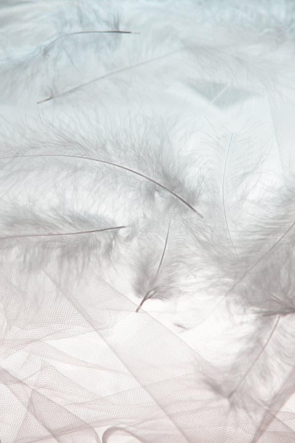 Plumas y Tulle fotografía de archivo libre de regalías