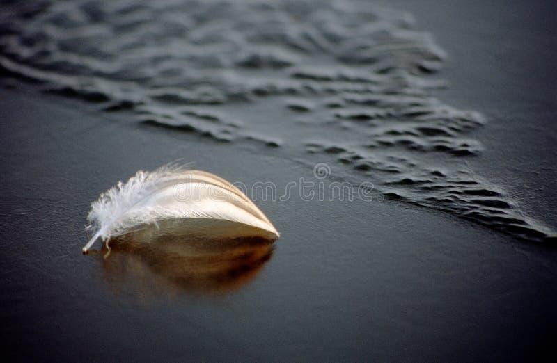 Plume blanche sur l'eau bleue congelée photographie stock
