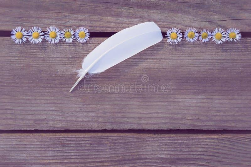 Plume blanche sur un fond en bois image libre de droits