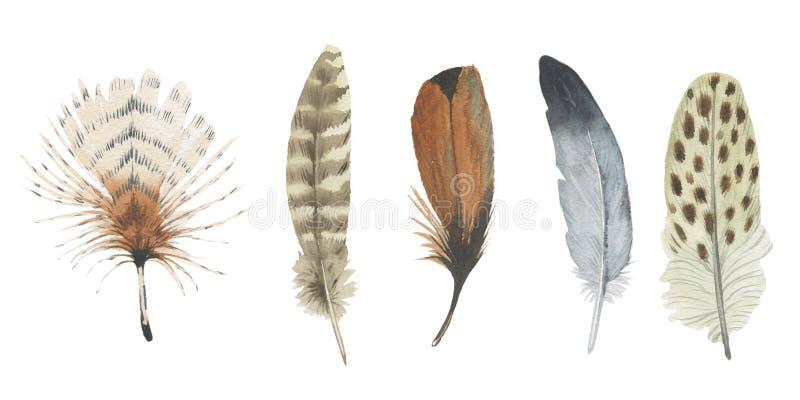 Plume d'oiseau d'aquarelle de l'aile d'isolement illustration stock