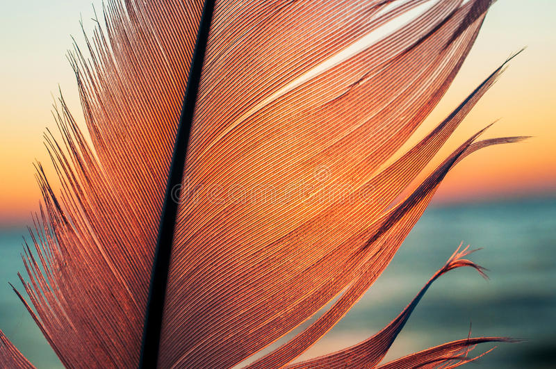 Plume d'oiseau sur le fond de coucher du soleil photos stock