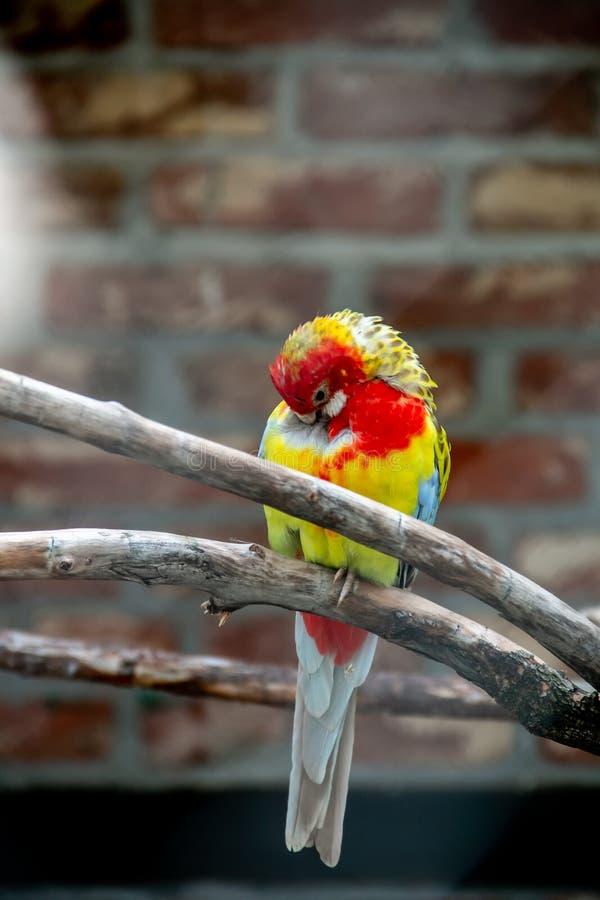 Plume de nettoyage d'oiseau images stock