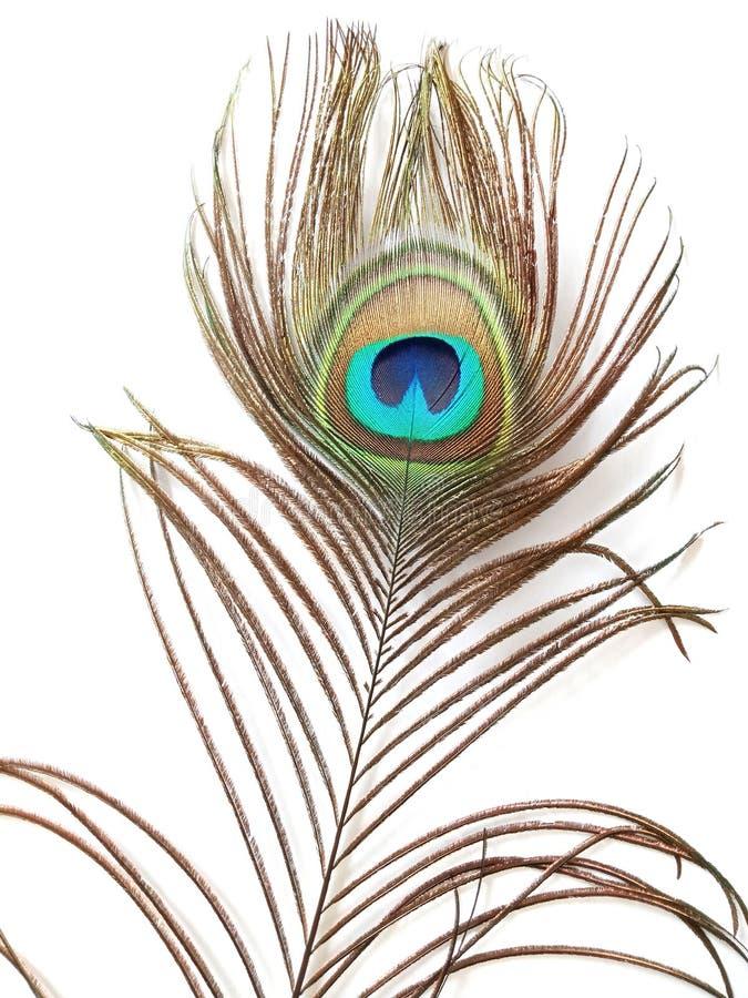 Plume de paon, détaillée illustration stock