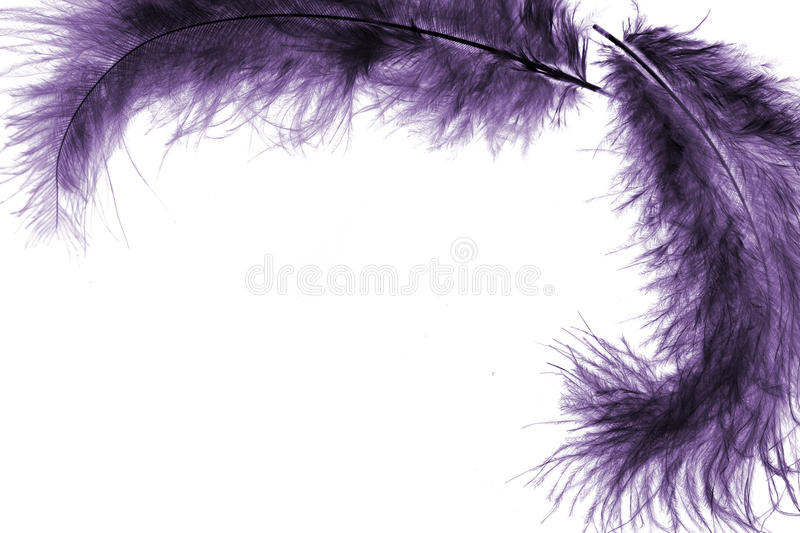 Plume frame. Purple plume frame with white background royalty free stock images