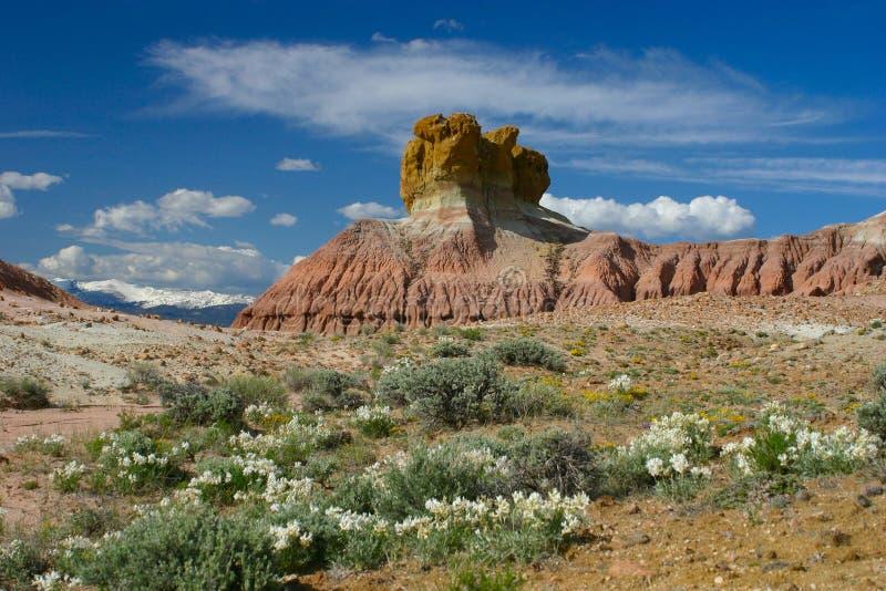 Plume las rocas y los Wildflowers imágenes de archivo libres de regalías