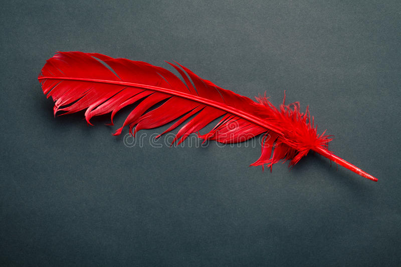 Plume rouge photographie stock