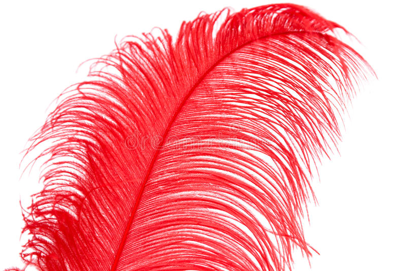 Plume rouge image stock