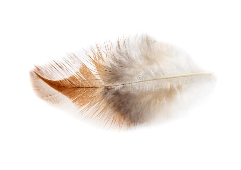 Plume simple d'isolement sur le fond blanc photos stock