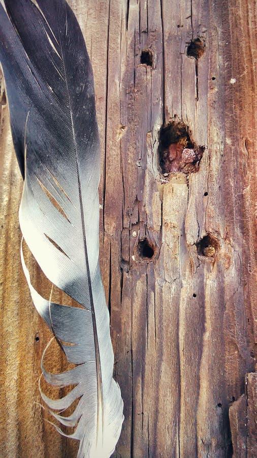 Plume sur le bois photo stock