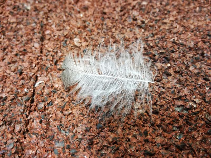 Plume sur le plancher photo stock