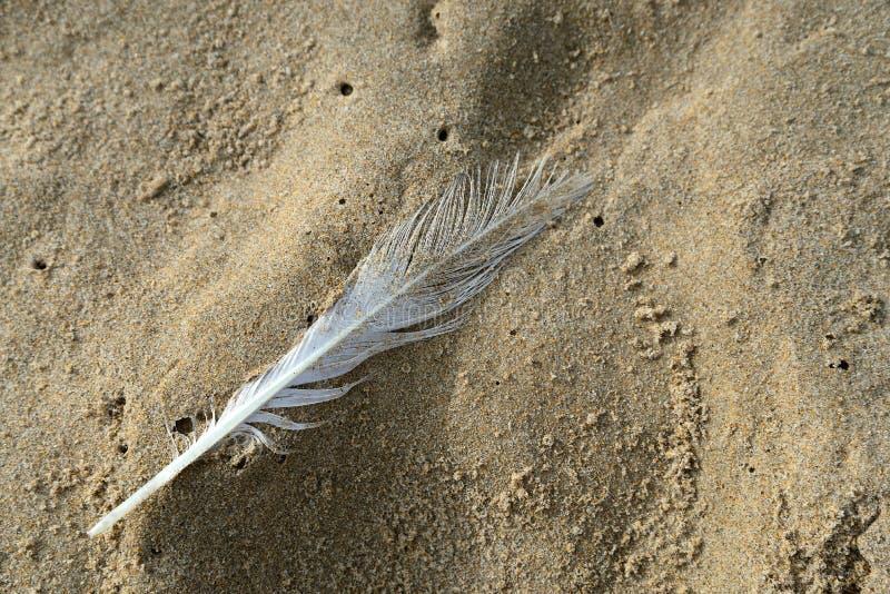 Plume sur le sable humide de plage photo libre de droits