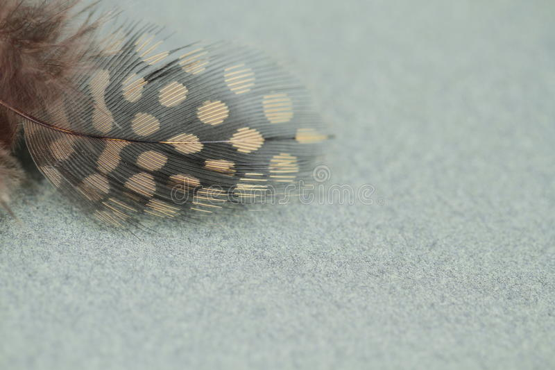 Plume tachetée d'oiseau image stock