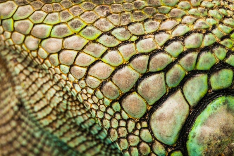 Plumed蛇怪顶头冠的特写镜头  免版税库存图片
