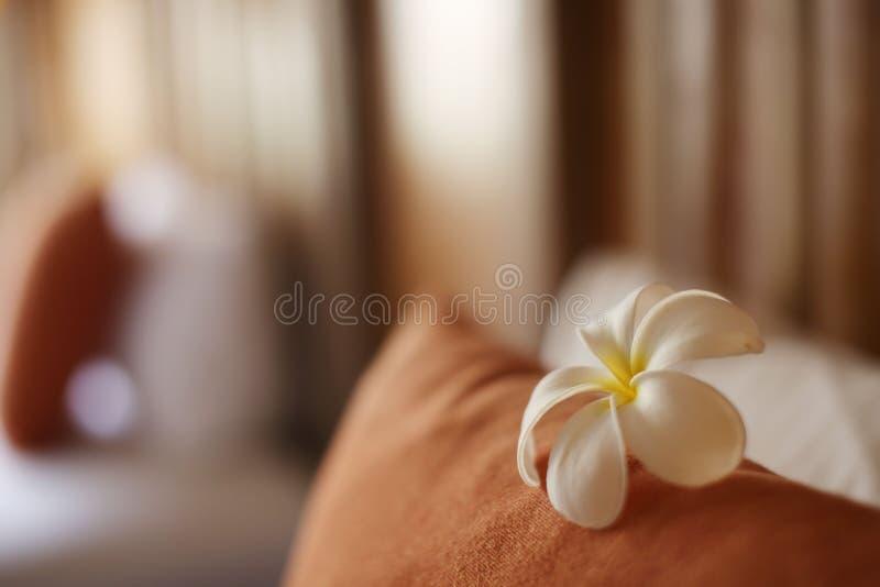 Plumelia blomma på kudden arkivfoton