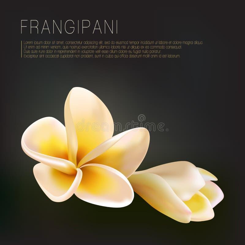 Plumeria ή λουλουδιών και οφθαλμών Frangipani διανυσματική απεικόνιση στο σκοτεινό μαύρο πράσινο υπόβαθρο απεικόνιση αποθεμάτων