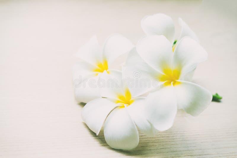 Plumeria цветет цветки свежих или Frangipani тропические на деревянных животиках стоковые изображения