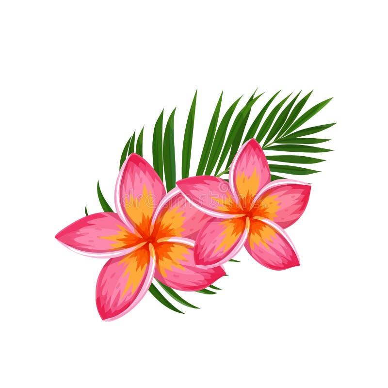 Plumeria, цветок лета тропический бесплатная иллюстрация