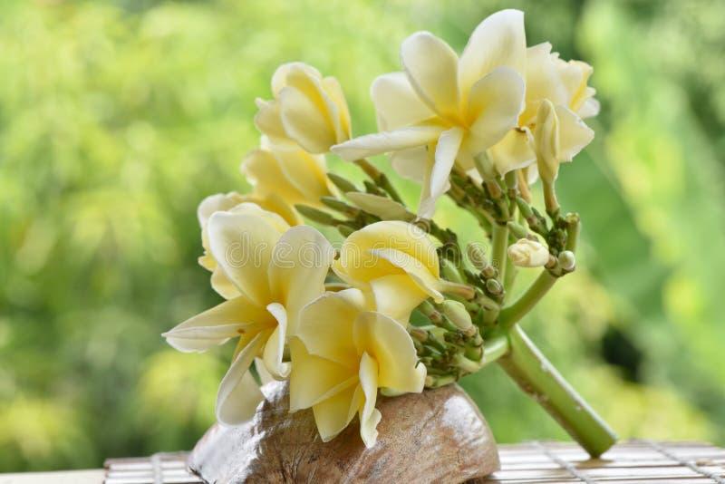 Download Plumeria fotografia stock. Immagine di fioritura, background - 56880018