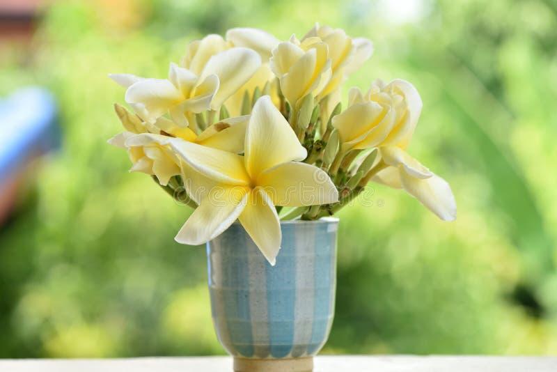 Download Plumeria immagine stock. Immagine di fioritura, distensione - 56882061