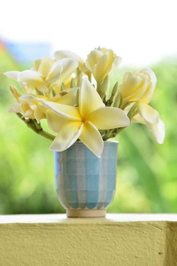 Download Plumeria fotografia stock. Immagine di fiori, distensione - 56882752