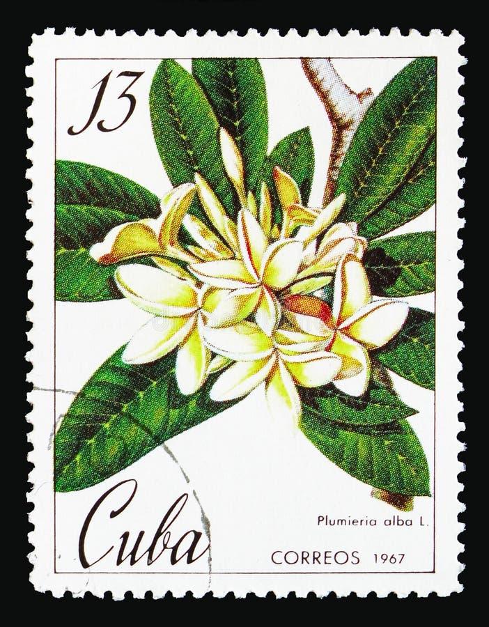 Plumeria alba, botanische Gärten in Kuba-serie, circa 1967 lizenzfreie stockbilder