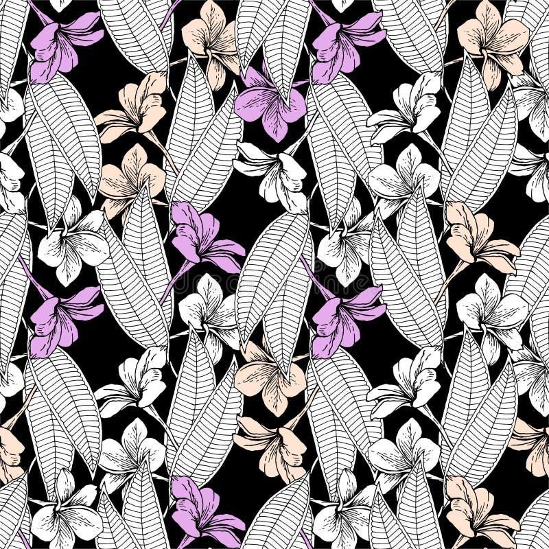 Plumeria blüht auf schwarzem Grund stock abbildung