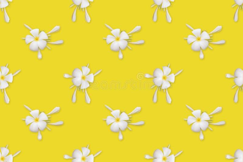 Plumeria blanco en el fondo amarillo, modelo inconsútil libre illustration