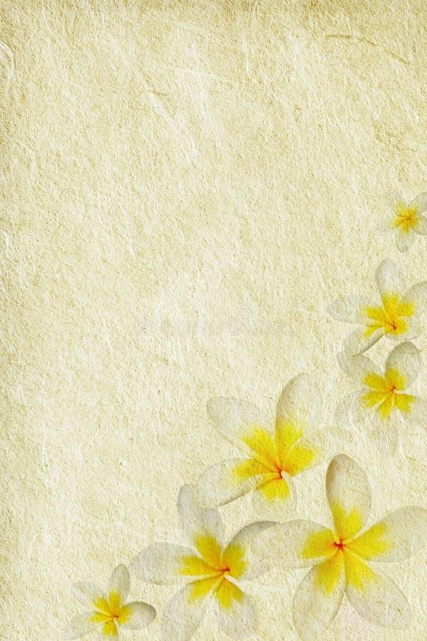 Download Plumeria de Grunge imagem de stock. Imagem de cópia, flor - 10062949