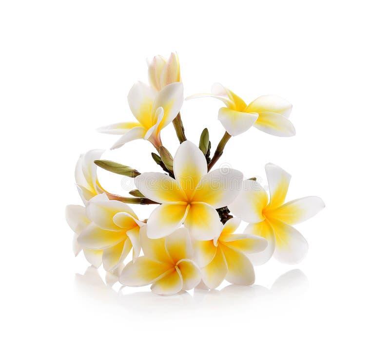 Plumeria en frangipanibloemen op witte achtergrond stock afbeelding