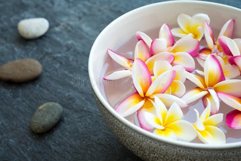 Plumeria flower floating in ceramic bowl and zen stones in tropical luxury asian spa stock photography