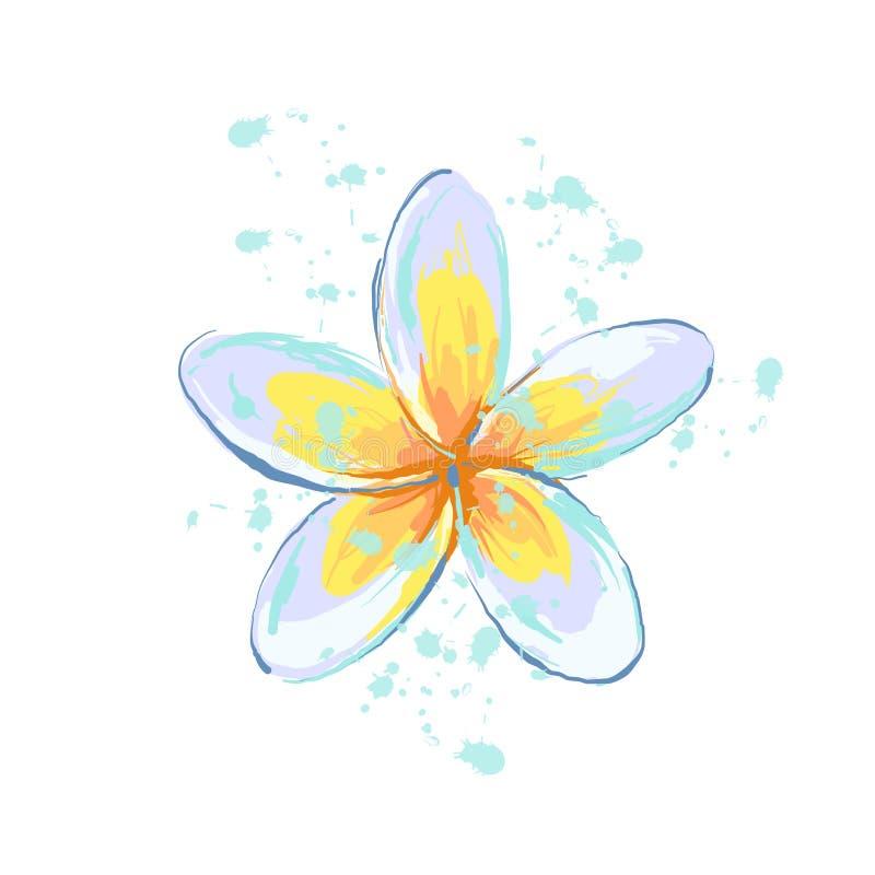 Plumeria flower with splash sketch style hand drawn illustrated element vector illustration