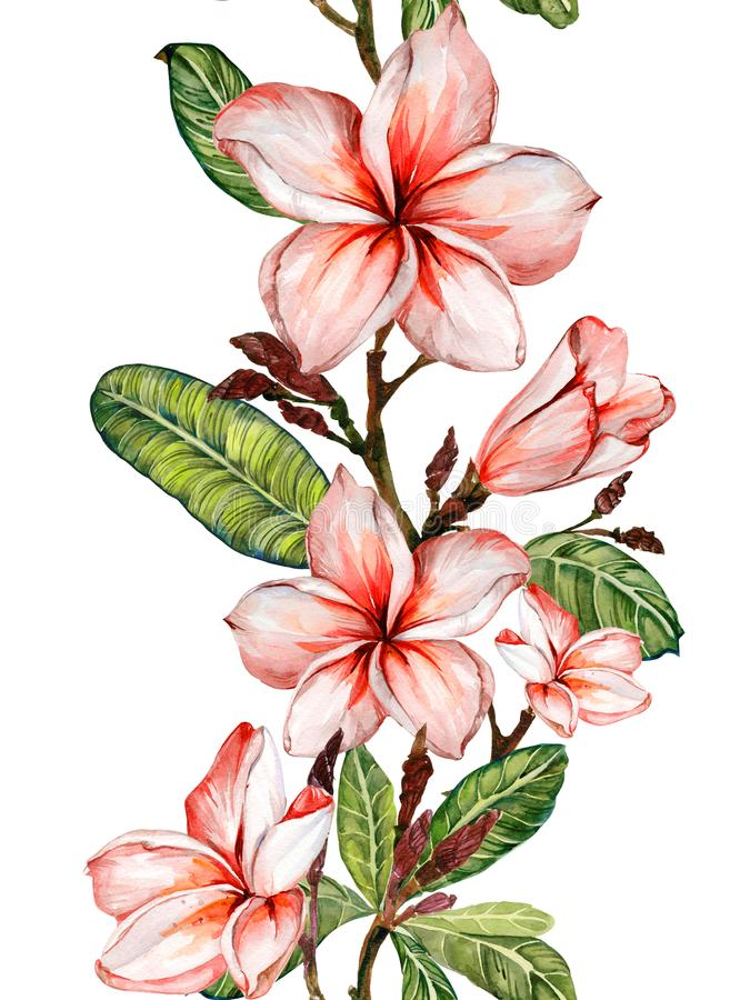 Plumeria flower on a twig. Border illustration. Seamless floral pattern. Isolated on white background. Watercolor painting. royalty free illustration