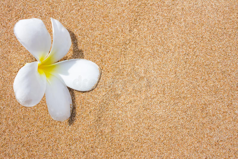 Download Plumeria Flowers On Beach Royalty Free Stock Photos - Image: 26528528