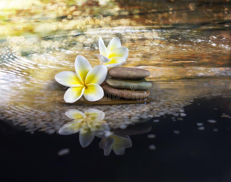 Plumeria fragrante bianca e gialla o frangipane del fiore su cryst fotografia stock libera da diritti