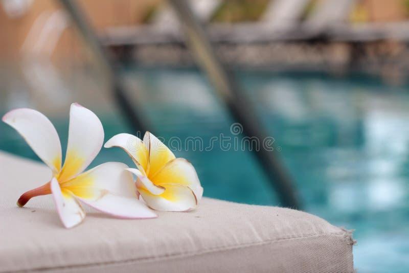 Plumeria kwiat i błękitny pływacki basen pluskotaliśmy wodnego szczegół zdjęcie royalty free