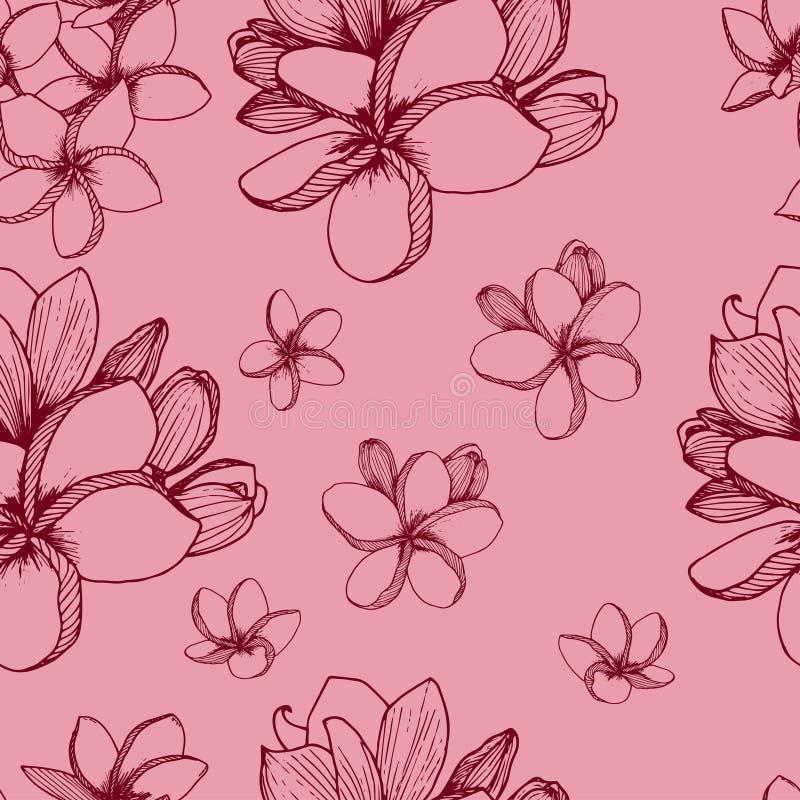 Plumeria kwiat?w wz?r ilustracji