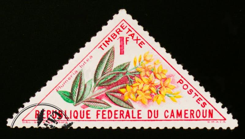 Plumeria lutea kwiat około 1963, zdjęcia royalty free