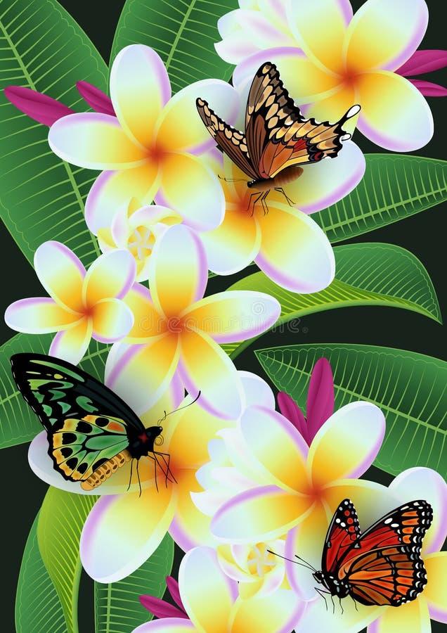 Plumeria motyle i kwiaty ilustracji