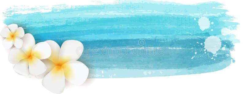 Plumeria na bandeira da aquarela imagem de stock