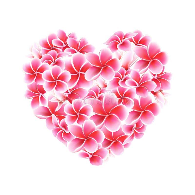 Plumeria o ejemplo del corazón del vector de las flores del Frangipani aislado en blanco imagen de archivo