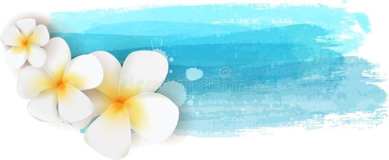 Plumeria på vattenfärgbaner royaltyfri illustrationer