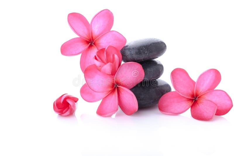 Plumeria rose lumineux photographie stock