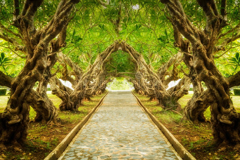 Plumeria tree tunnel royalty free stock images